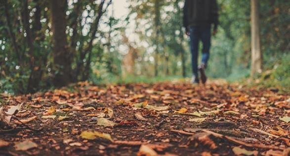 LABC Autumn training courses